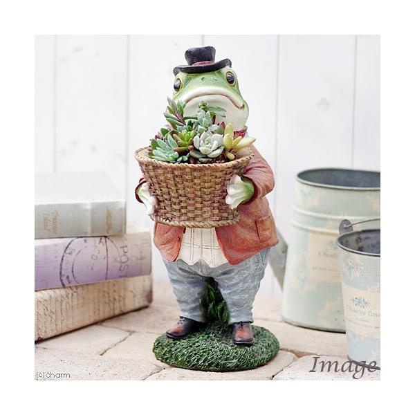 RoomClip商品情報 - (観葉)私のオアシス 多肉寄せ植え 動物達の贈り物 カエルのエリック(1鉢)(説明書付)
