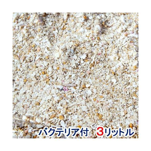  (海水魚)バクテリア付き ライブアラゴナイトサンド(約3L) 海水水槽用底砂 航空便不可 沖縄不可
