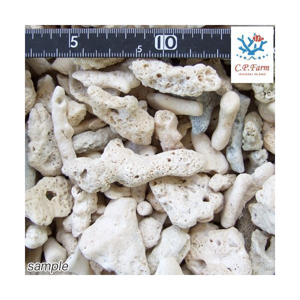 C.P.Farm直送 サンゴ砂 コーラルピース XLサイズ 軽洗浄済み 10kg(約10L)(0.45個口相当)別途送料|chanet