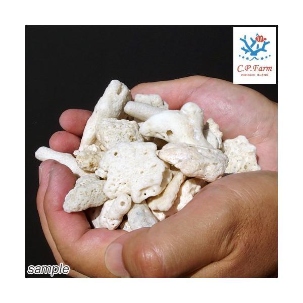 C.P.Farm直送 サンゴ砂 コーラルピース XLサイズ 軽洗浄済み 10kg(約10L)(0.45個口相当)別途送料|chanet|02