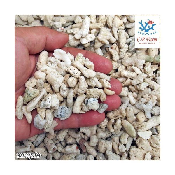 C.P.Farm直送 ライブコーラルピース LLサイズ 1kg(約0.8L) バクテリア付きサンゴ砂(0.12個口相当)別途送料|chanet|02