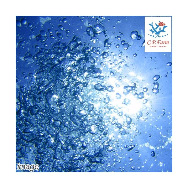 C.P.Farm直送(海水魚)石垣島産 天然海水 24L(1個口相当)送料込み 海水|chanet