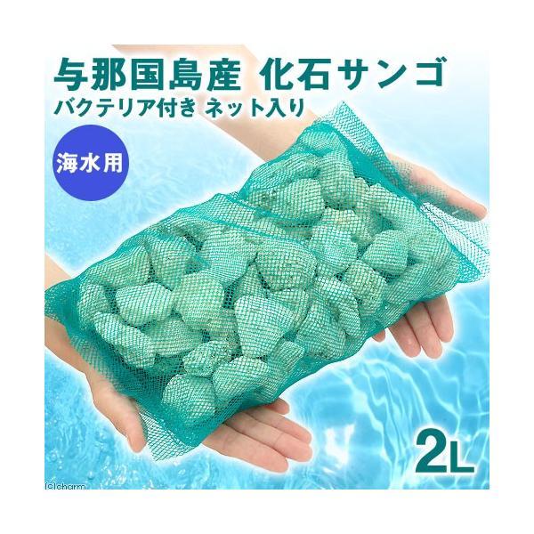 (海水魚)ろ材 与那国島産 化石サンゴ バクテリア付き ネット入り 2リットル 北海道・九州航空便要保温|chanet