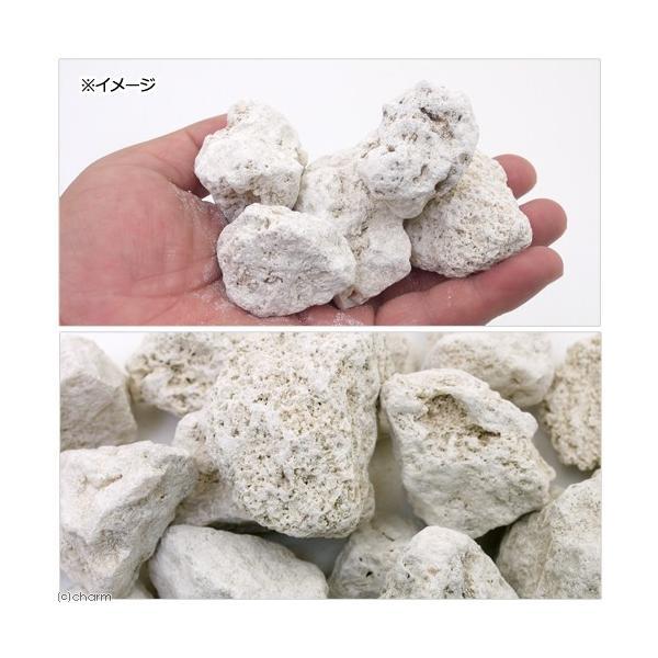 (海水魚)ろ材 与那国島産 化石サンゴ バクテリア付き ネット入り 4リットル 北海道航空便要保温|chanet|02