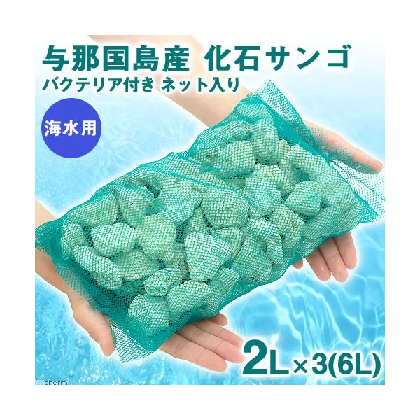 (海水魚)ろ材 与那国島産 化石サンゴ バクテリア付き ネット入り 6リットル 沖縄別途送料|chanet