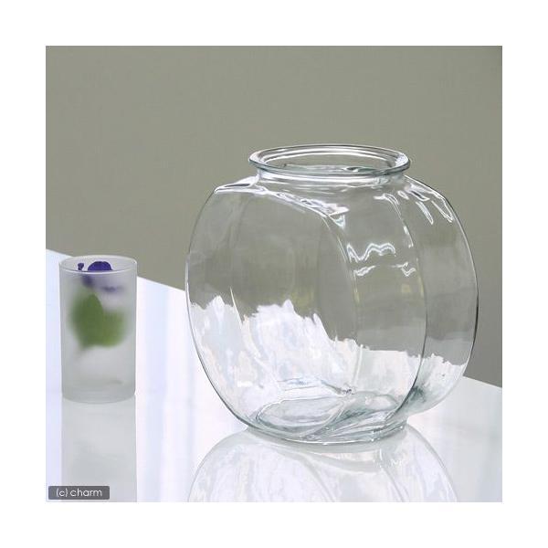おしゃれなガラス製金魚鉢太鼓鉢中(3.8リットル)