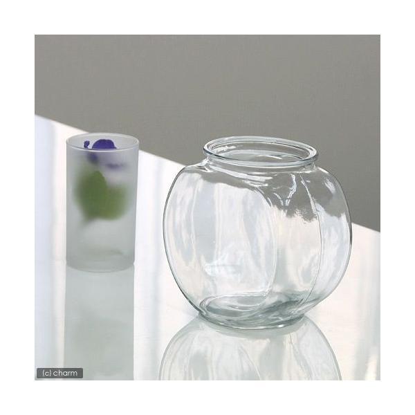 おしゃれなガラス製金魚鉢太鼓鉢小(1.2リットル)