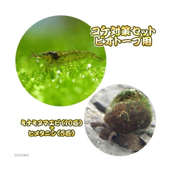  (エビ・貝)コケ対策セット ビオトープ用 ミナミヌマエビ(10匹) + ヒメタニシ(5匹) 北海道…