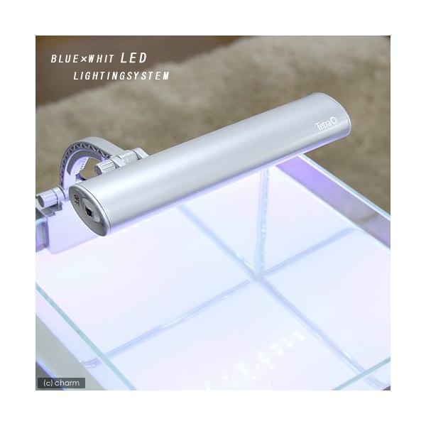 テトラ LEDミニライト LED−MINI 小型水槽用照明 熱帯魚 水草 アクアリウムライト 関東当日便|chanet