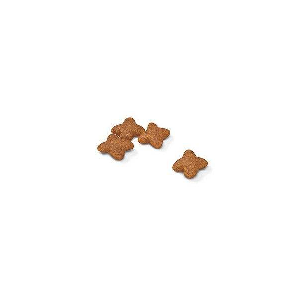 ロイヤルカナン ミニ アダルト 成犬用 2kg 3182550402170 ジップ付 関東当日便|chanet|02