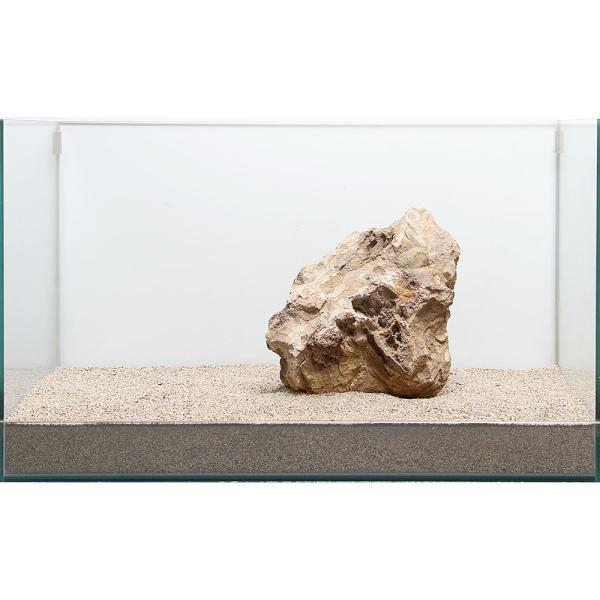 一点物 木化石 親石 60cm水槽用 896515