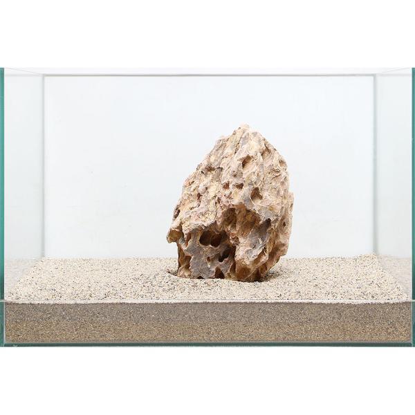 一点物 陽火石 親石 45cm水槽用 896559
