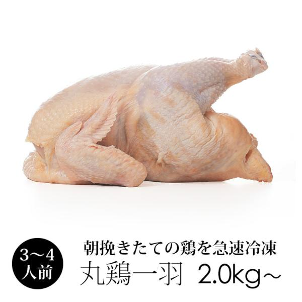 丸鳥 紀州うめどり 中抜き 丸鶏 1羽 約2kg〜 (冷凍) 国産 鶏肉【紀の国みかんどり(その他ブランド鶏)での代用出荷】
