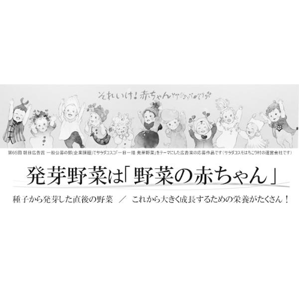 野菜セット 発芽野菜 おためし 11品セット ブロッコリースプラウト 豆苗 子大豆もやし お試し ギフト 送料無料|chicory|03