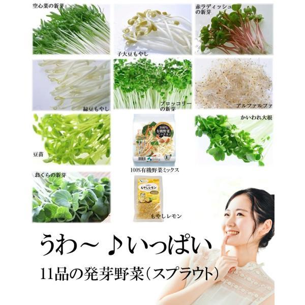 野菜セット 発芽野菜 おためし 11品セット ブロッコリースプラウト 豆苗 子大豆もやし お試し ギフト 送料無料|chicory|04