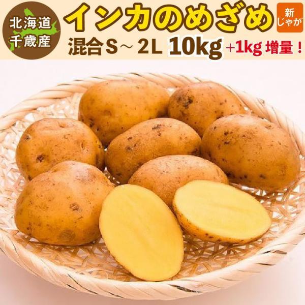 インカのめざめ 新じゃが 11kg(10kg+1kg増量)S〜2Lサイズ混合  北海道 千歳産 ご予約販売 9月下旬発送 じゃがいも ジャガイモ 送料無料 訳あり