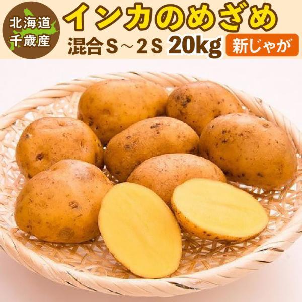 インカのめざめ 新じゃが 20kg S〜2Sサイズ混合 北海道 千歳産 ご予約販売 9月下旬発送 じゃがいも ジャガイモ 送料無料 訳あり