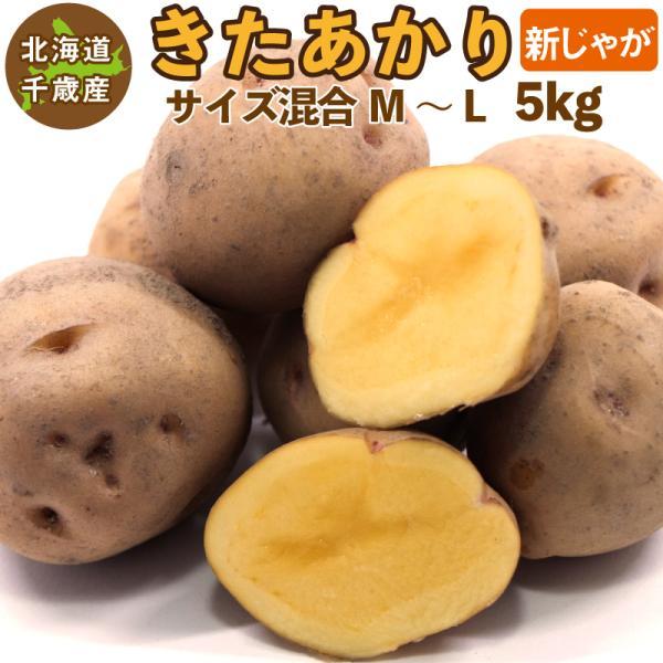 北海道産 きたあかり 新じゃが M〜Lサイズ混合 5kg  ご予約販売 9月上旬発送  じゃがいも ジャガイモ キタアカリ 北あかり 送料無料 訳あり