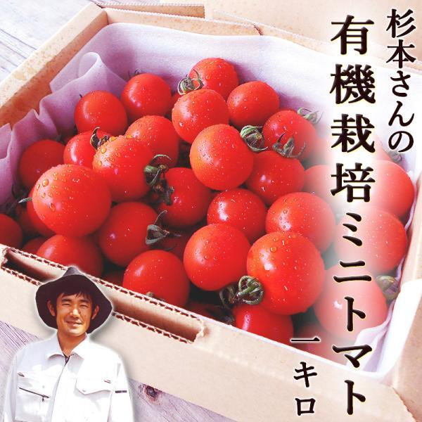 トマト 杉本さんの 有機栽培トマト 約1キロ 有機栽培 高知県大豊町産 有機JAS認定 農薬不使用 国産 糖度 トマト 中玉トマト 健康 プレゼント はるひ畑