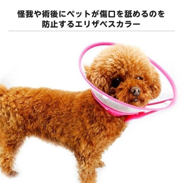 舐める 犬 傷口