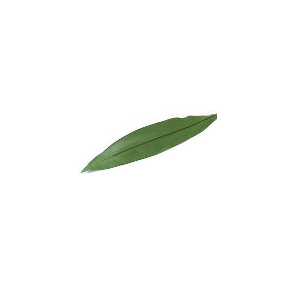 ハラン(2枚セット)   造花 リアル インテリアグリーン フェイクグリーン 南国 夏 トロピカル 葉っぱ バリ雑貨 ココバリ|cocobari|03