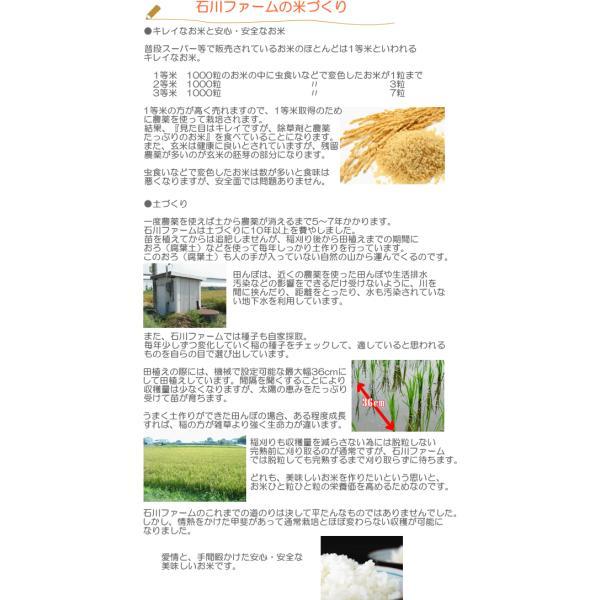 玄米10kg  石川ファーム 自然栽培米/無農薬|crea193|04
