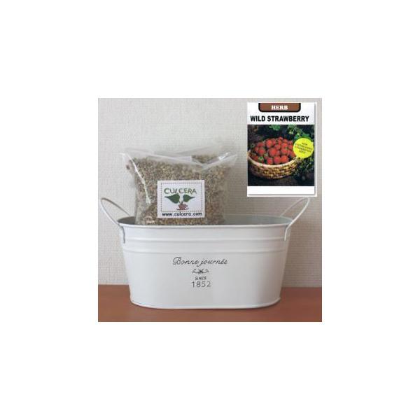 ワイルドストロベリーの栽培セット標準セット【液体肥料なし】/プランターホワイト