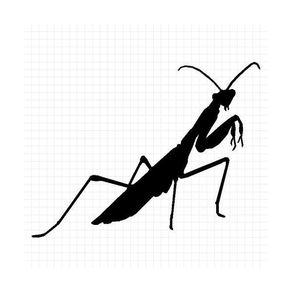 カマキリ 虫 ステッカー|cuttingsoul|02