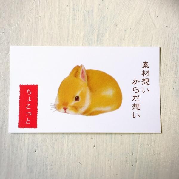 プレミアムギフトセット無添加クッキー8【ちょこっと】7個入×8袋|cyoimaru|03