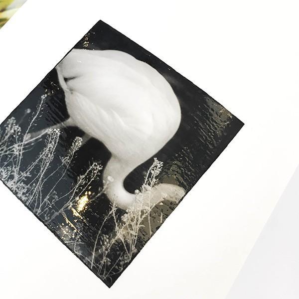 平野タカシ『STEREOTYPICAL BEHAVIOR』|d-tsutayabooks|03