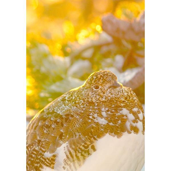 雷鳥 Messneger from god, who wearing scenery|d-tsutayabooks|08