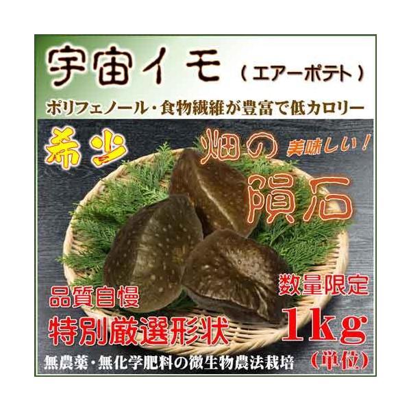 宇宙イモ エアーポテト1kg  形の良いものを厳選 旬の野菜 ヤマノイモ カシュウイモ 粘りと食感の新健康食材|daichi-megumi
