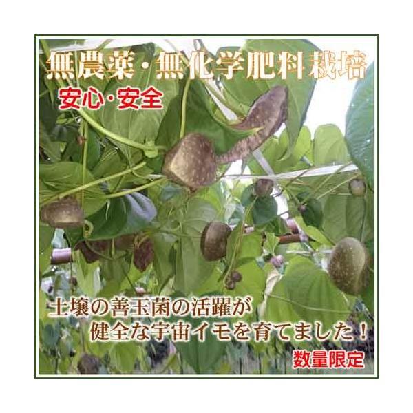 宇宙イモ エアーポテト1kg  形の良いものを厳選 旬の野菜 ヤマノイモ カシュウイモ 粘りと食感の新健康食材|daichi-megumi|04