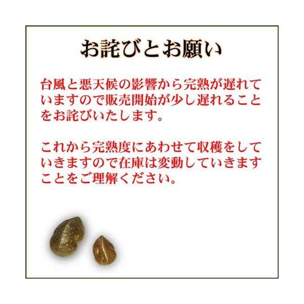 宇宙イモ エアーポテト1kg  形の良いものを厳選 旬の野菜 ヤマノイモ カシュウイモ 粘りと食感の新健康食材|daichi-megumi|05