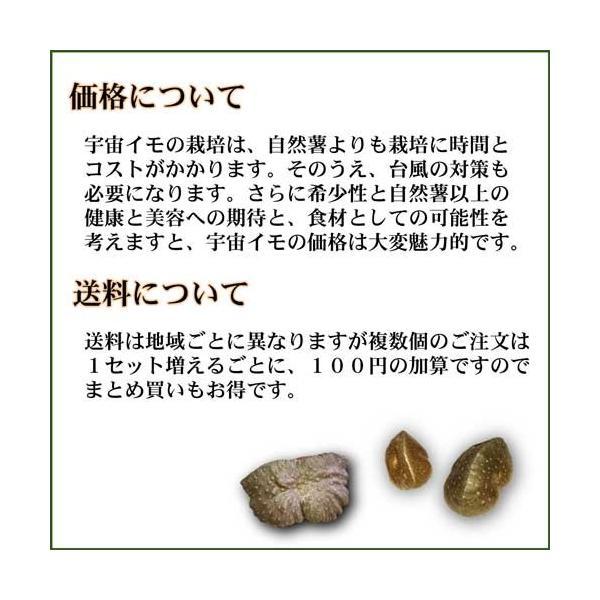 宇宙イモ エアーポテト1kg  形の良いものを厳選 旬の野菜 ヤマノイモ カシュウイモ 粘りと食感の新健康食材|daichi-megumi|06