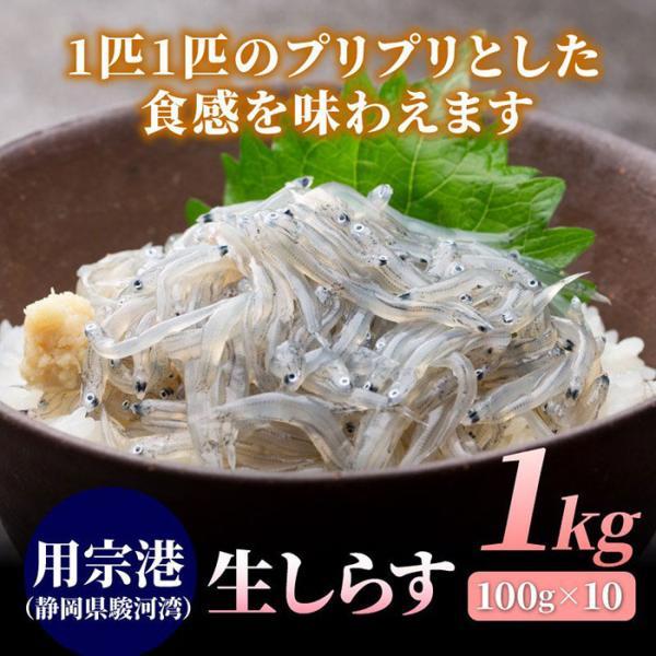 生しらす1kg(100g×10) しらす シラス 生シラス 冷凍 用宗港 駿河湾 静岡 #元気いただきますプロジェクト