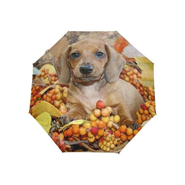 naanle Dachshund Puppy Autumn LeavesフルーツAuto Open Close折りたたみ式トラベル傘