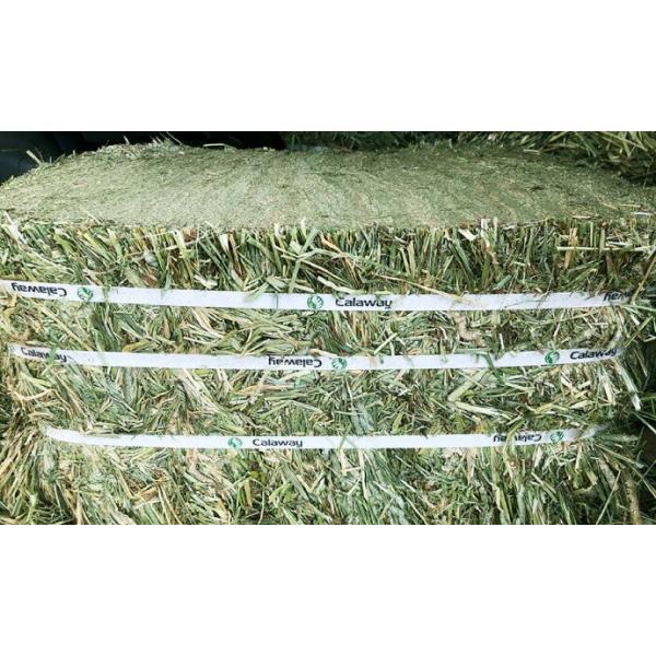 最安挑戦牧草チモシーダブルプレス約30kg1番刈り(アメリカ産)圧縮スーパープレミアムチモシー小動物エサ敷材 HTF