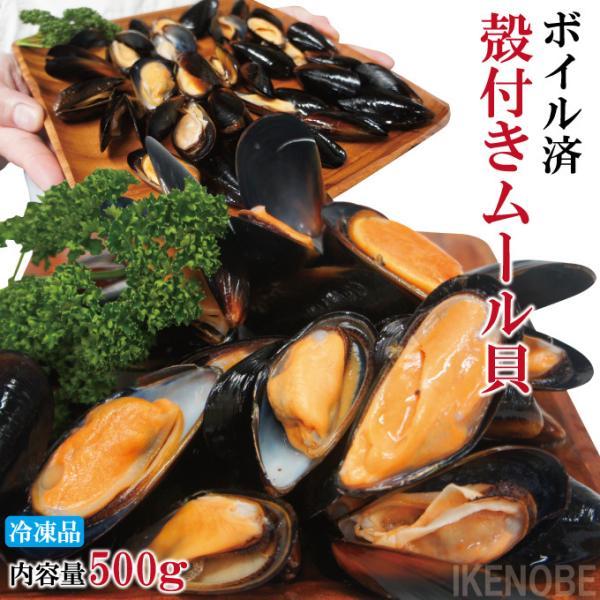 ムール貝500gボイル冷凍 殻付きムール貝 解凍後そのまま食べれます 鍋 パスタやパエリヤやブイヤベースに イガイ ムラサキガイ パーナ貝ではない