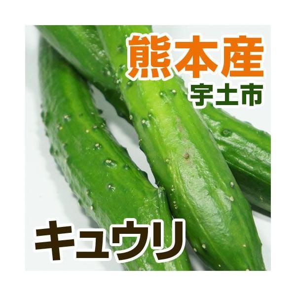 熊本産 キュウリ 1袋  ( 野菜セット と同梱で送料無料 ) ( 九州 熊本 きゅうり  胡瓜 実野菜 )