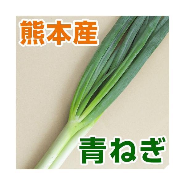熊本産  青ねぎ 1袋   野菜セット と同梱で送料無料  葉物 青 薬味 ネギ ねぎ 葱 九州 熊本 野菜 葉ネギ