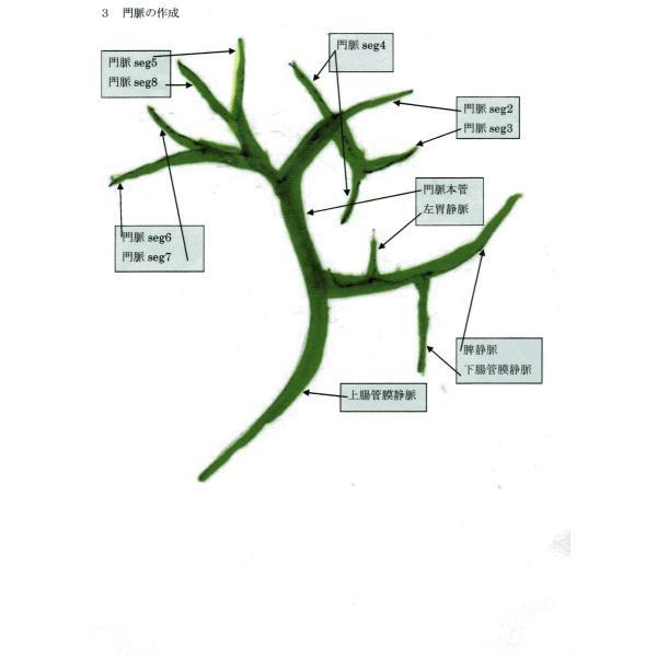 動脈静脈門脈胆道4管立体模型標準型作成キット|deepseawartergm0|11
