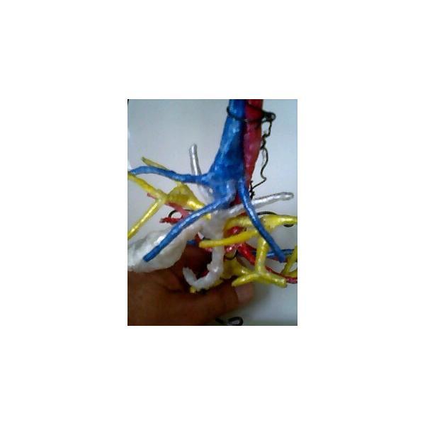 動脈静脈門脈胆道4管立体模型標準型作成キット|deepseawartergm0|05