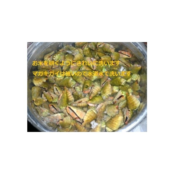 ボイルマガキ貝殻付き4800g冷凍パック|deepseawartergm0|02
