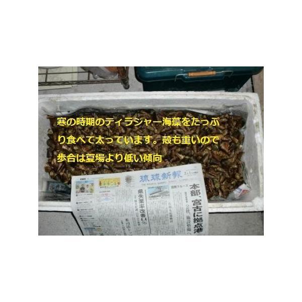 ボイルマガキ貝殻付き4800g冷凍パック|deepseawartergm0|11