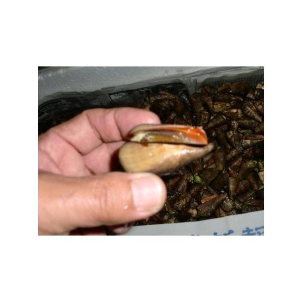 ボイルマガキ貝殻付き4800g冷凍パック|deepseawartergm0|12
