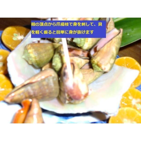 ボイルマガキ貝殻付き4800g冷凍パック|deepseawartergm0|13