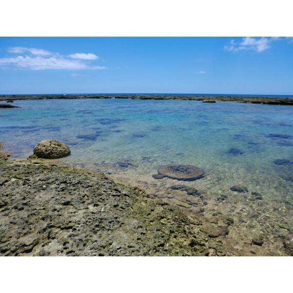ボイルマガキ貝殻付き4800g冷凍パック|deepseawartergm0|14