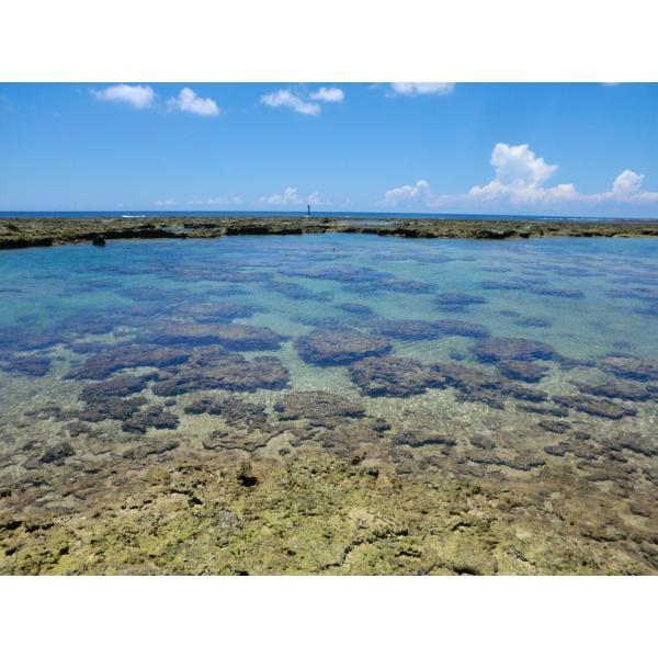 ボイルマガキ貝殻付き4800g冷凍パック|deepseawartergm0|15