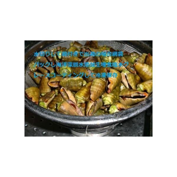 ボイルマガキ貝殻付き4800g冷凍パック|deepseawartergm0|05